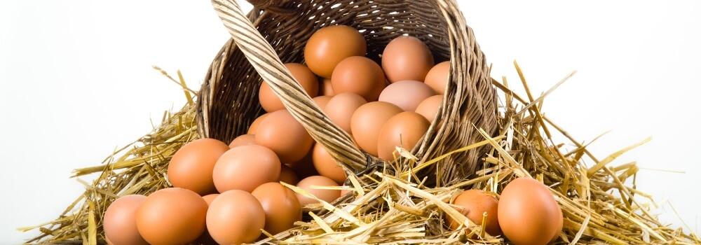 org-yumurta