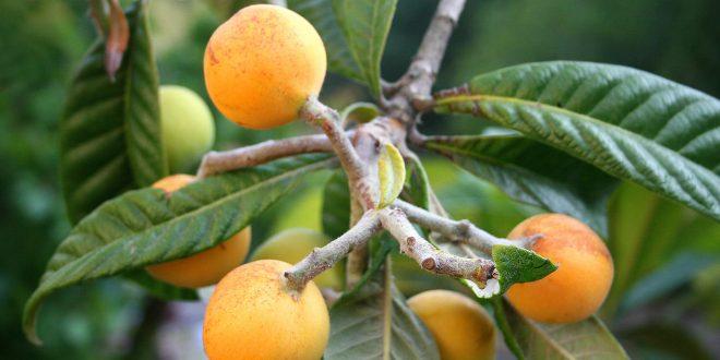 organik-yenidünya-organikciyizbiz (3)