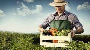 organiktarim-organikürünler-organikciyizbiz (9)