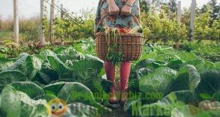 organik ürünleri tüketmenin önemi