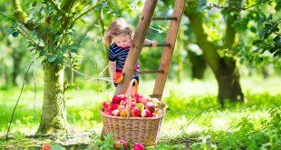 çocuklarda vegan beslenme