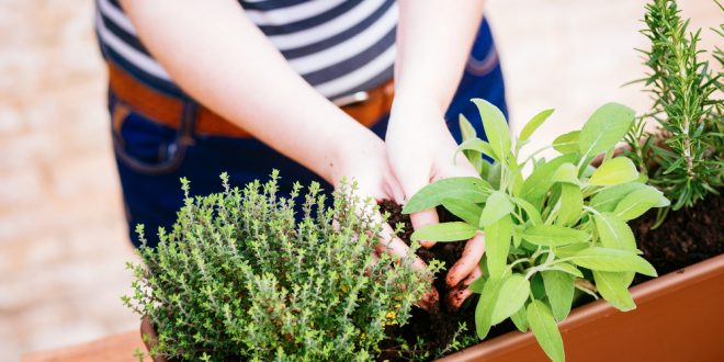 balkonda sebze yetiştirme