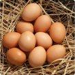 Organik Yumurta