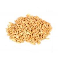 Organik Aşurelik Buğday (Den) - Sarıgelin