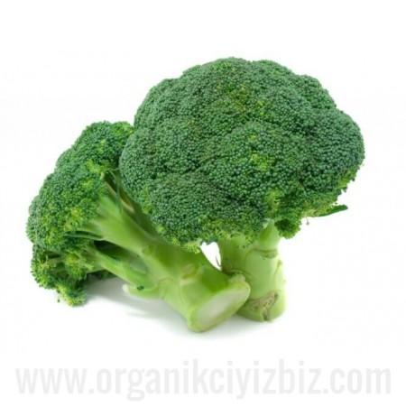 Organik Brokoli - Organik Ufuklar