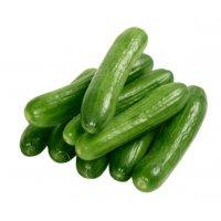 Organik Salatalık - Organik Ufuklar