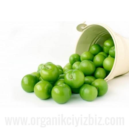 Organik Yeşil Erik - Organik Ufuklar