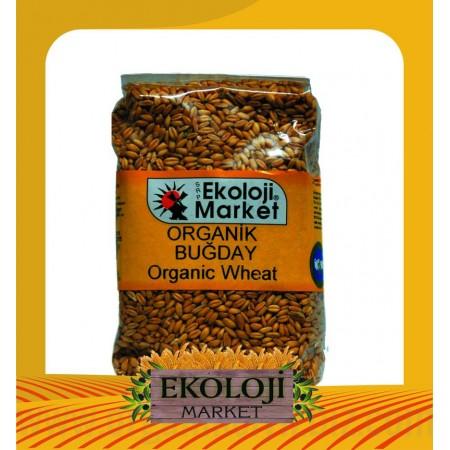 Organik Buğday 500gr - Ekoloji Market