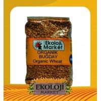 Organik Buğday - Kapor