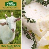 Organik Klasik Beyaz Keçi Peyniri - Saklı Cennet