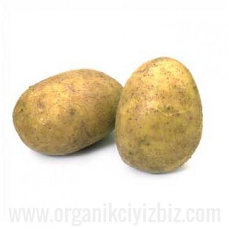 Organik Patates - Organik Ufuklar